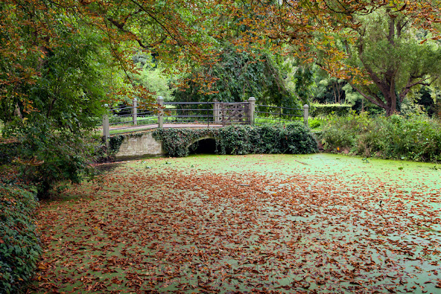 Leaves lie on a green river in Cambridgeshire by Martyn Ferry Photography