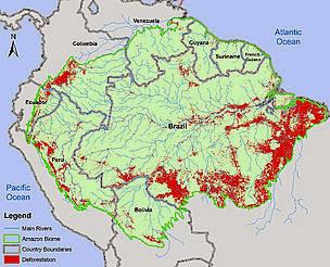 deforestación selva amazónica  problemas