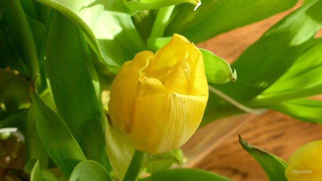 Gele tulp in een boeket met lente bloemen.