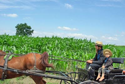 La plupart des amish vivent aux usa, dans 21 états et en Ontario (Canada). Les Mennonites sont au nombre de 1 million répartis dans 60 pays, près de la moitié en Amérique du nord.