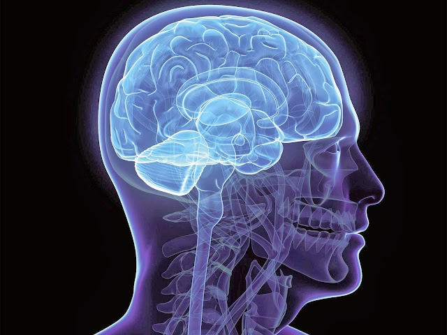 Estude e saiba ainda mais sobre Neuro Anatomia