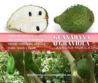 propiedades y usos de la guanabana o graviola