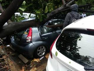 mobil sirion tertimpa pohon