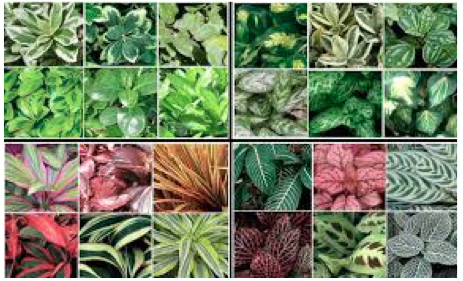 Historia geograf a y econom a for Plantas ornamentales del ecuador