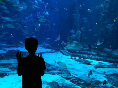 Dubai Lost Kingdom Aquarium tank view