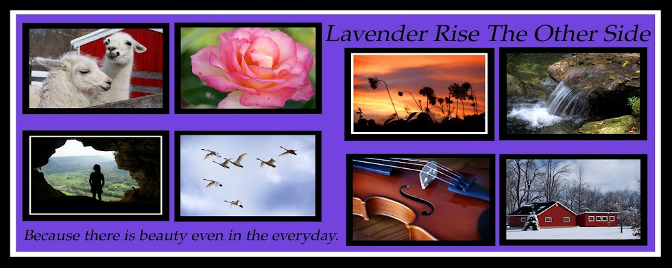 Lavender Rise the Other Side