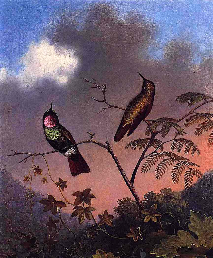 a Martin Johnson Heade color painting of exotic birds