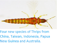 http://sciencythoughts.blogspot.co.uk/2013/10/four-new-species-of-thrips-from-china.html