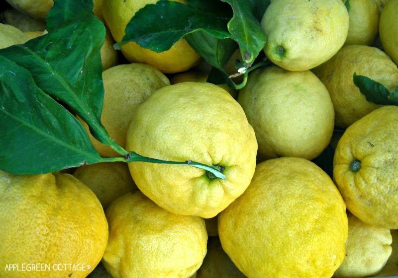 freshly picked lemons on Corsica