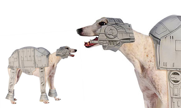 DOGS Dressed in Star Wars Costumes All Year 'Round! | BOLD ...