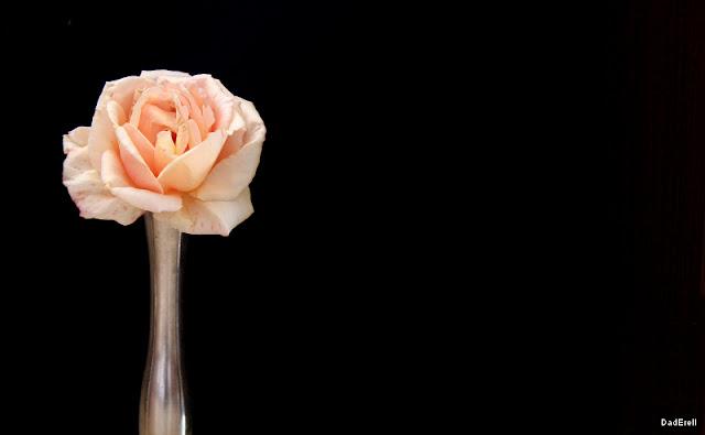 Une rose dans un vase
