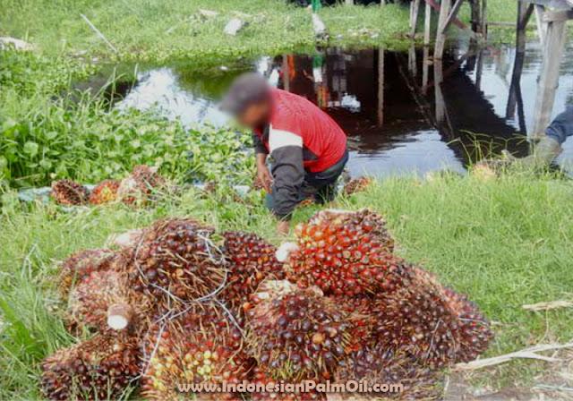Dinas Perkebunan Bengkulu Utara Usulkan Sarana Dan Prasarana Kelapa Sawit