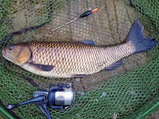 Chub caught on trotted pellet