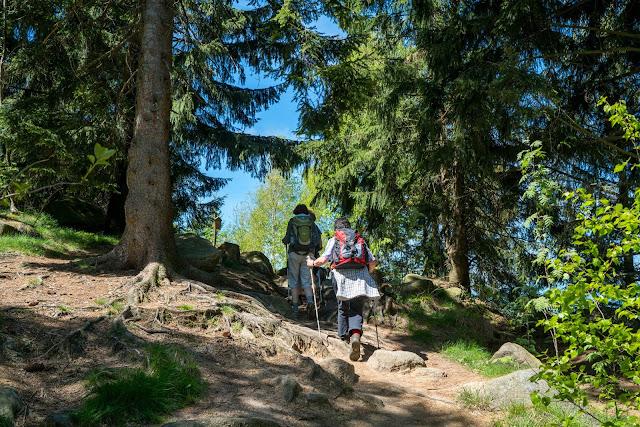 Gestütswiesen und Kästeklippen  Wandern Bad Harzburg 08