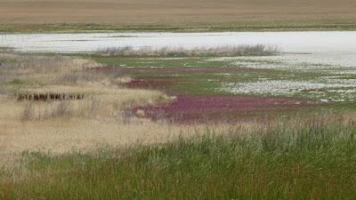 Liebenthal, Saskatchewan, alkaline, slough, landscape