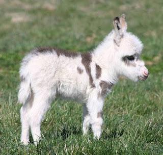 Green Pear Diaries, animales bebé, crías, tiernos, burro
