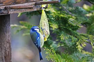 graines oiseaux jardin