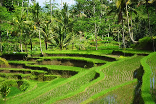 Filosofi Keserasian dalam Masyarakat Agraris Pulau Dewata