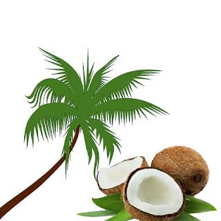 Manfaat Pohon Kelapa & Buah Kelapa