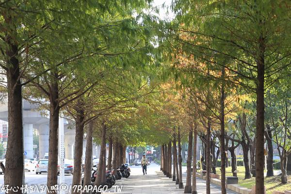 台中南屯|台中文心森林公園、圓滿戶外劇場-全台最大的戶外表演環型劇場