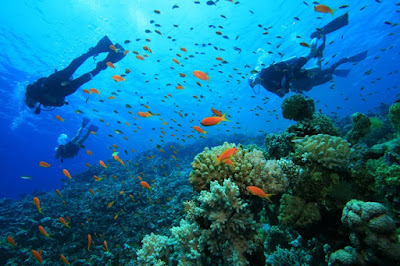 Pondicherry Scuba Diving