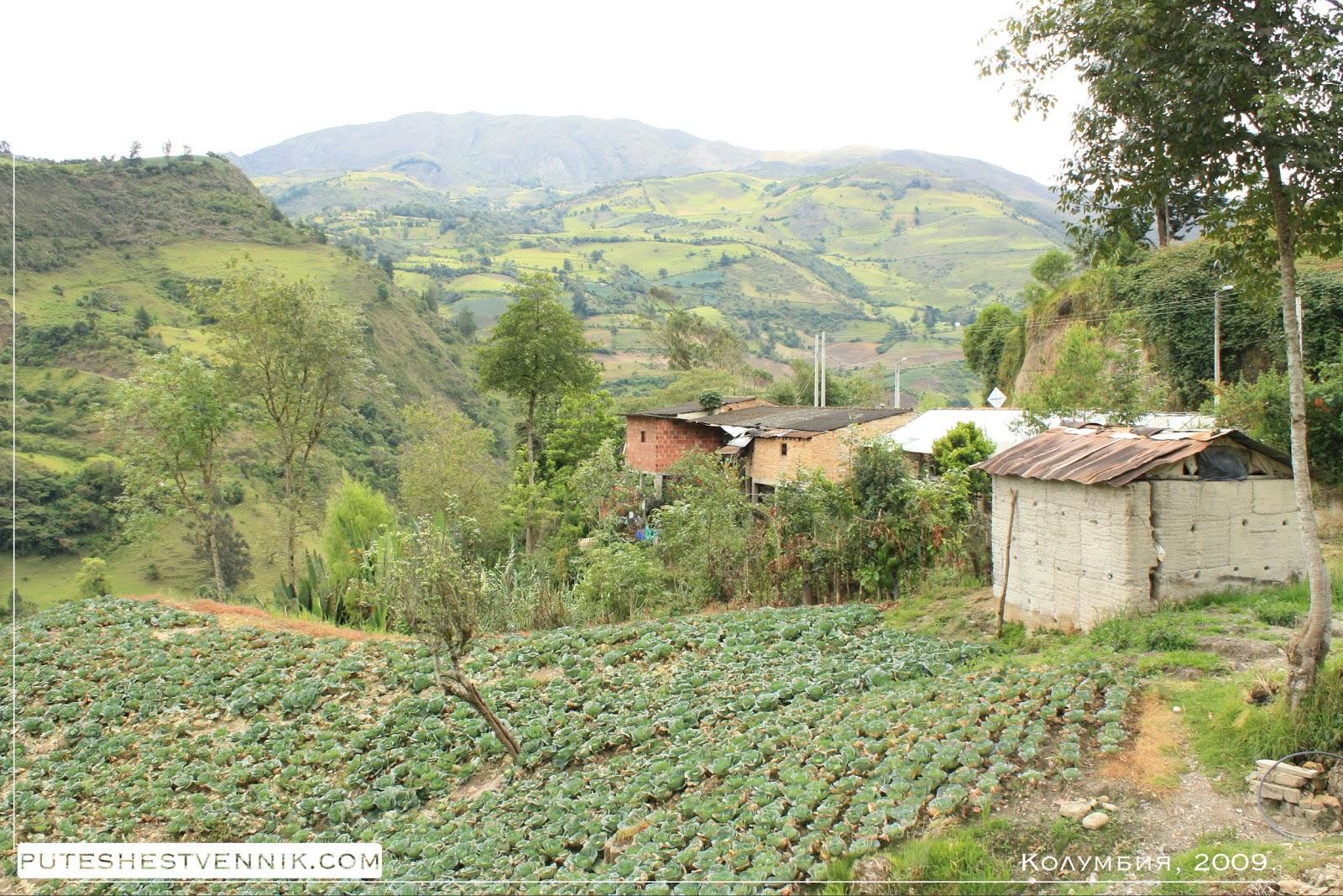 Огород с капустой в Колумбии