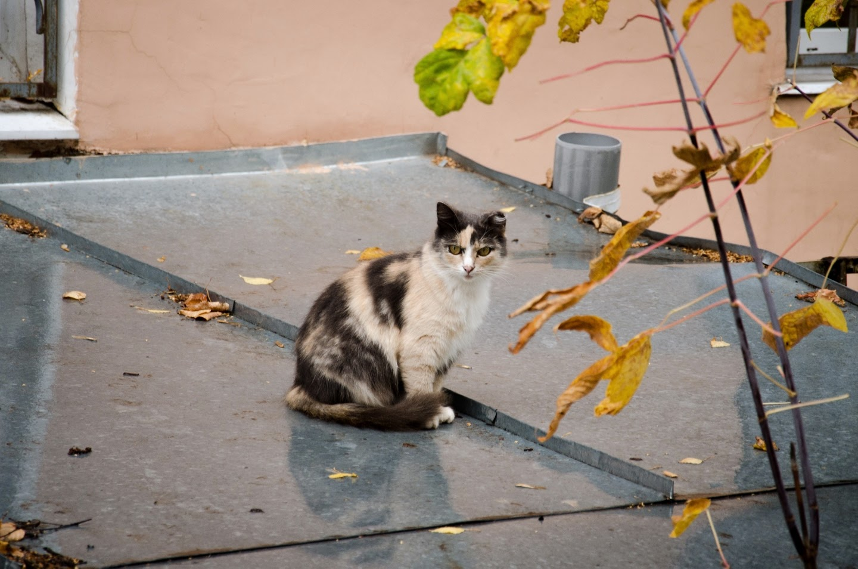 Кошки и Кинешма