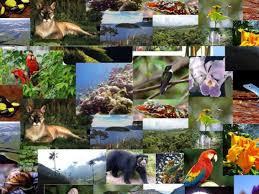 Biodiversidad de la costa pac fica buenaventura for Importancia economica ecologica y ambiental de los viveros forestales