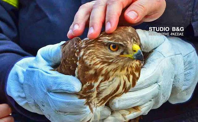 Διάσωση πληγωμένου Γερακιού στο Σκαφιδάκι από το Κυνηγετικό Σύλλογο Ναυπλίου