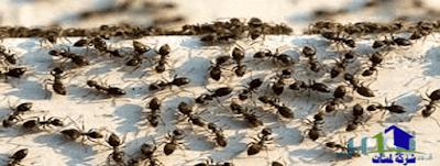 مكافحة النمل,التخلص من النمل فى المنزل