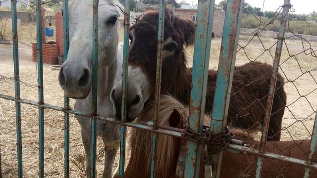 AYUDA: Animales abandonados sin comida ni agua en Chiclana