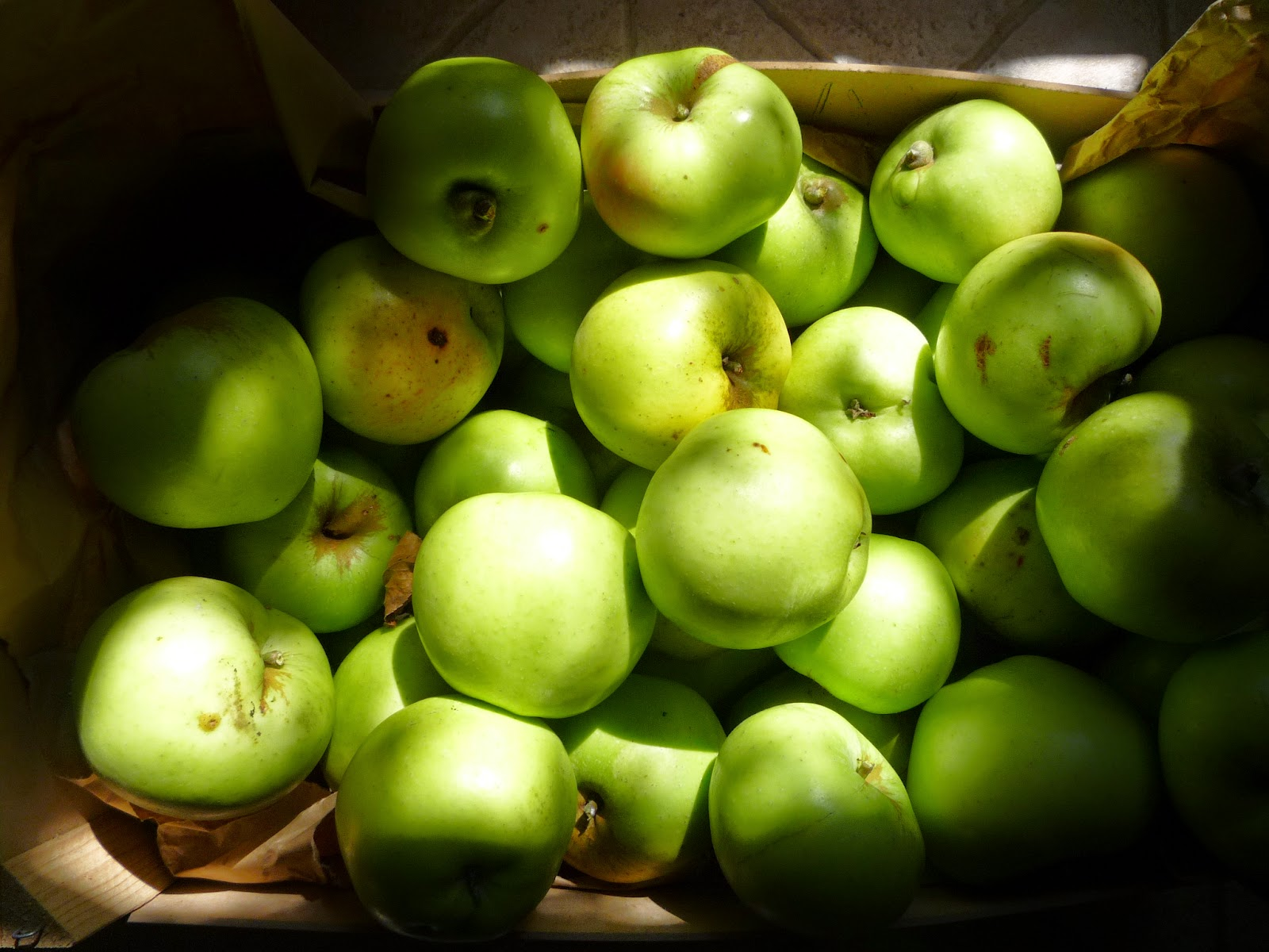Organic Catshead apples