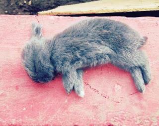 Penyebab Kelinci Mati dan Cara Mencegah Agar Tidak Mati