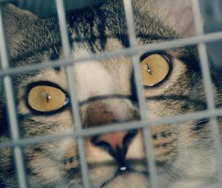 Cara Merawat Kucing Hamil Sampai Melahirkan