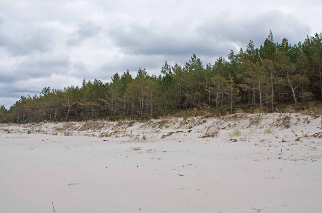 Karwia plaża widok na las i okolicę
