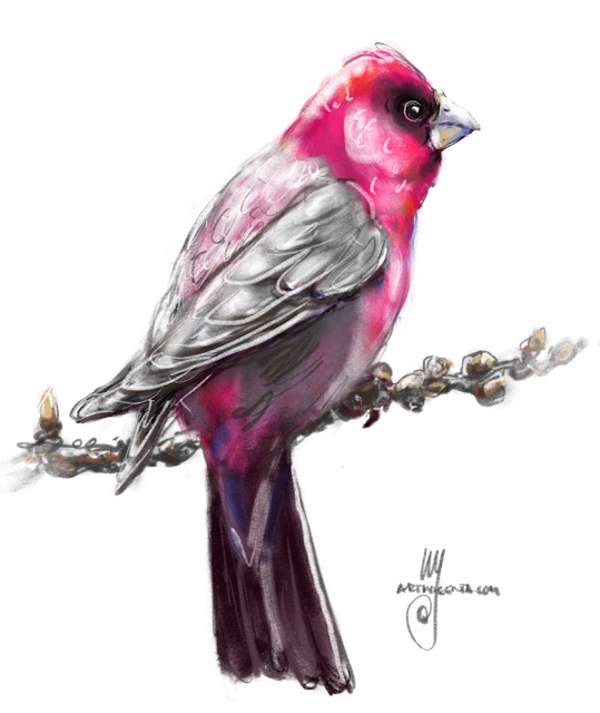 Rosefinch bird painting by Ulf Artmagenta