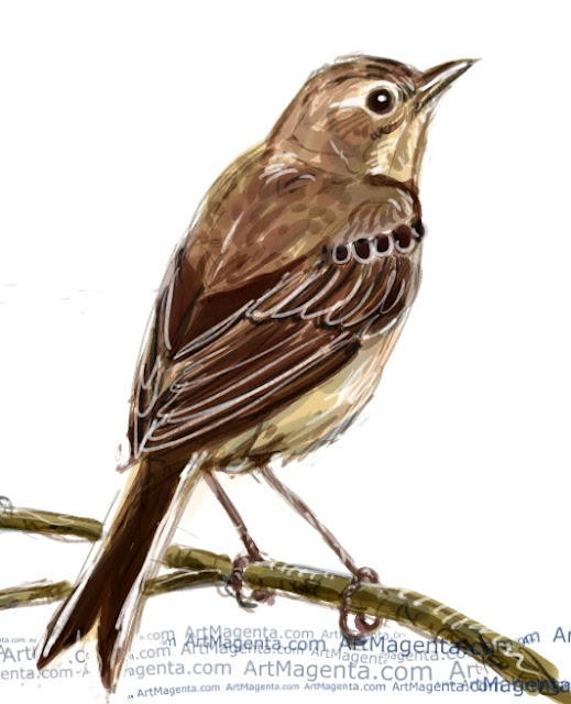 Tawny pipit sketch painting. Bird art drawing by illustrator Artmagenta