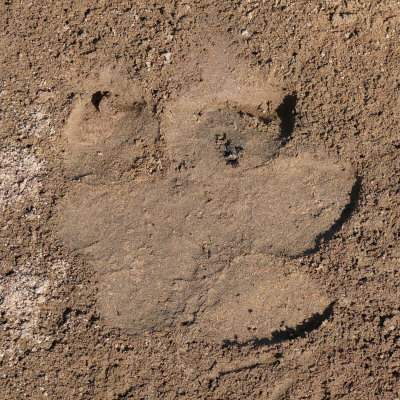 Cute Wallpapers Of Kittens And Puppies Hd Animals Hippo Footprint
