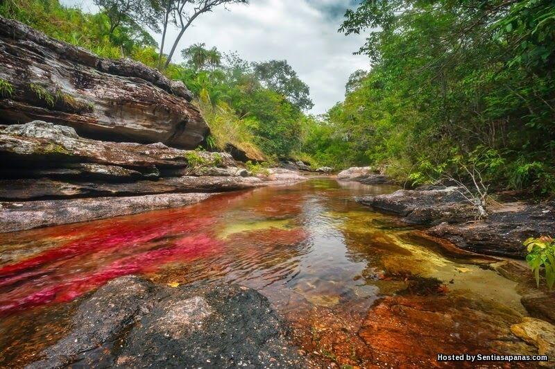 Sungai Cano Cristales, Colombia
