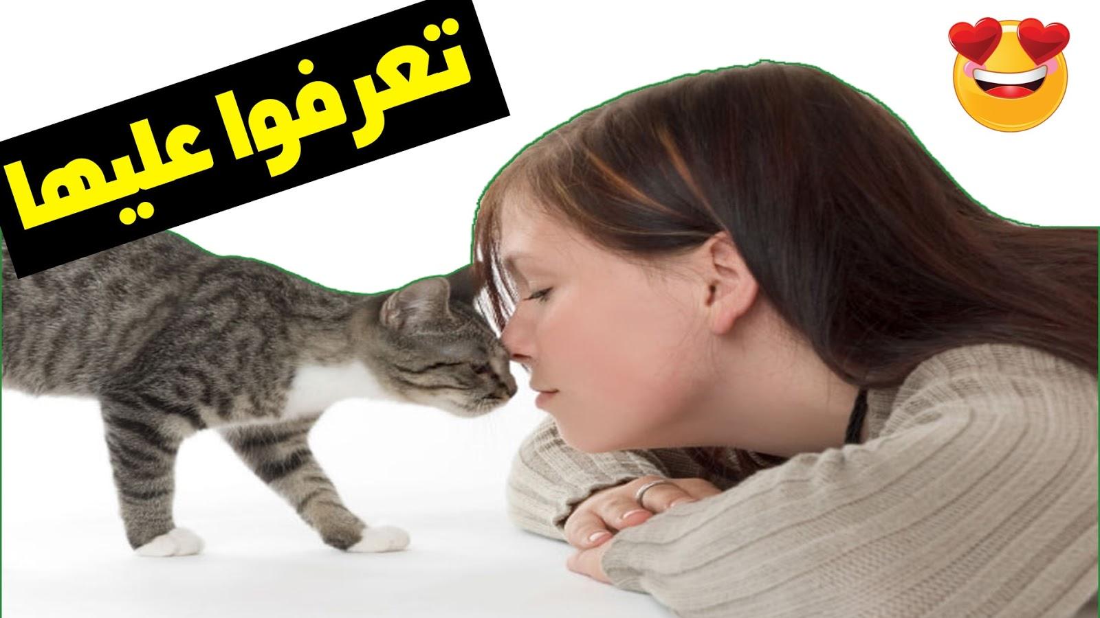 أكثر 10 أشياء تحبها القطط - معلومات عن القطط
