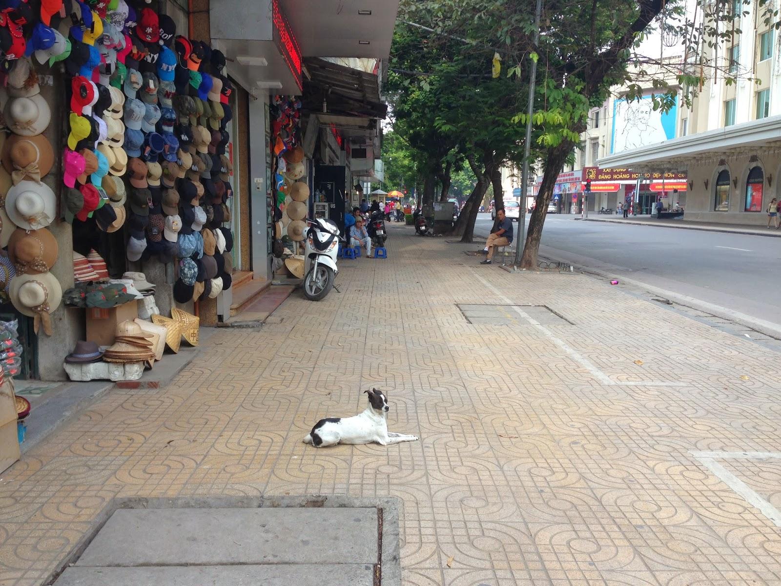 side-walk-withcutedog-hanoi-vietnam ハノイの道端で犬と出会う