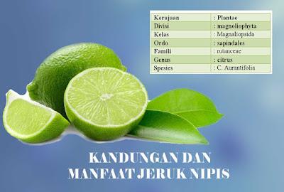 Kandungan dan manfaat buah jeruk nipis bagi kesehatan