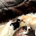 Perro Labrador Salvó A Su Compañero De Morir Ahogado En Un Río