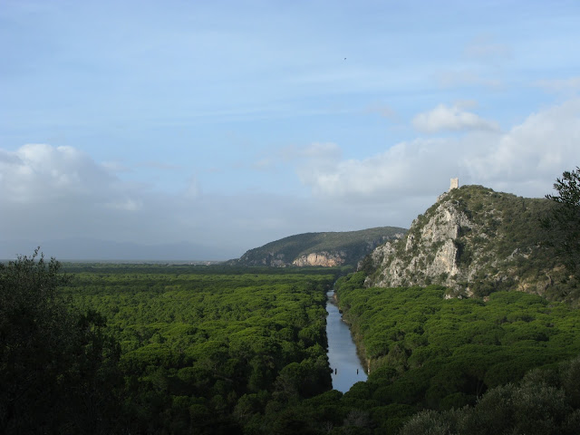 View over pine tree forests, channels and a medieval tower