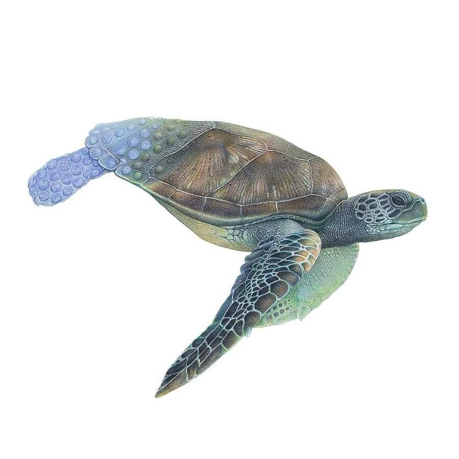 10-Sea-Turtle-Martin-Aveling-Animal-Portraits-www-designstack-co