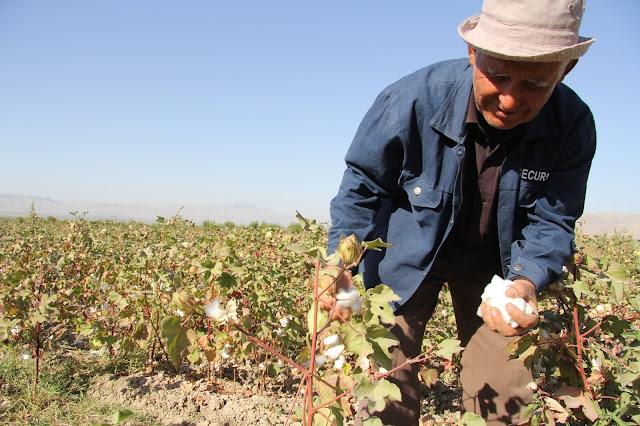 Tadjikistan, Yavan, coton, Pardaboy © L. Gigout, 2012