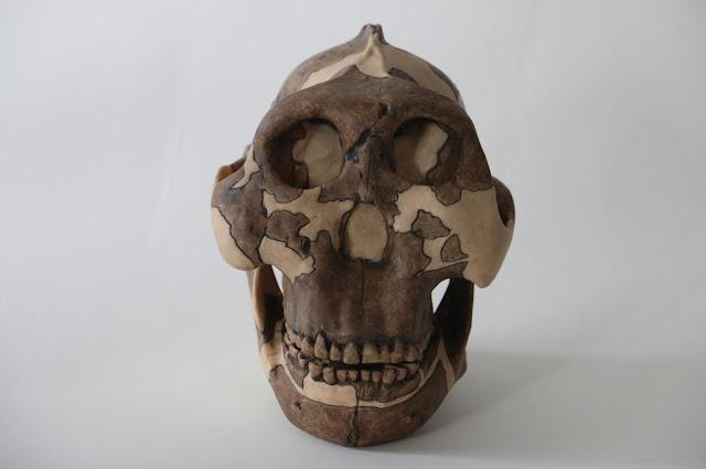 Meet the hominin species that gave us genital herpes
