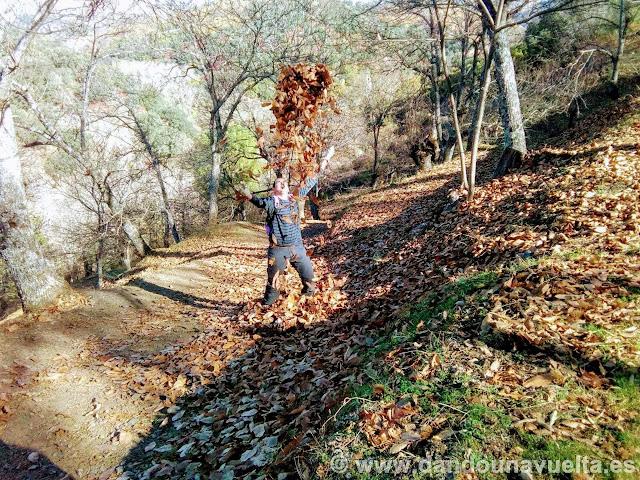 Muchas hojas de castaños en la ruta de senderismo de los castaños Parauta