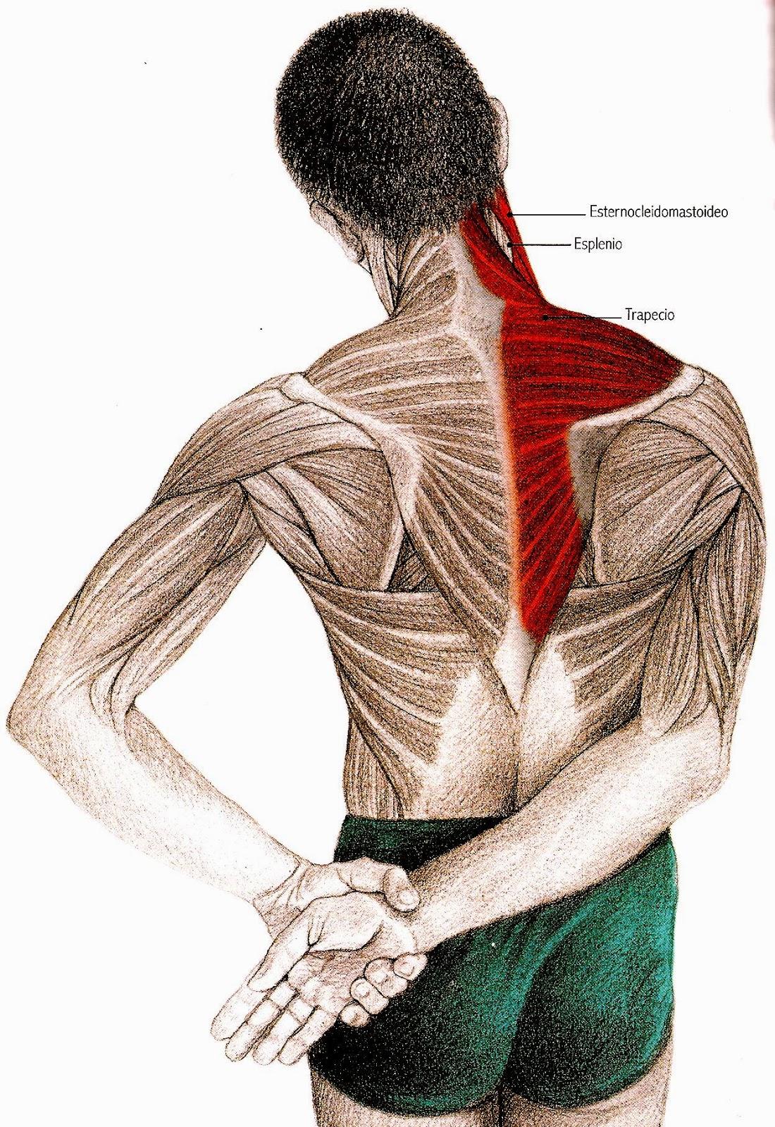Pilates Marisa Rodriguez  Ejercicios para aliviar el dolor de cuello ... 192611e7eb64