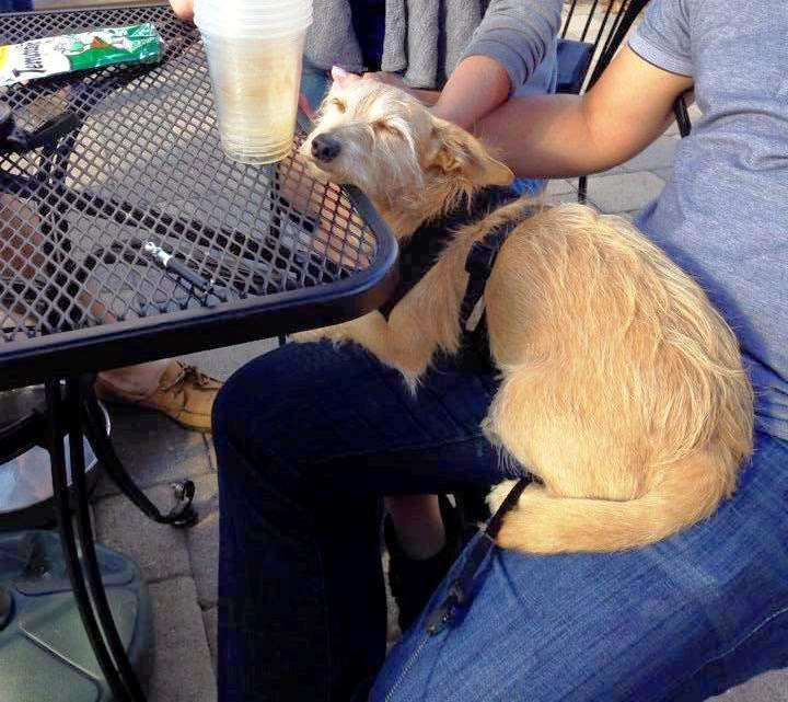Dog Friendly Restaurants Downtown Indianapolis